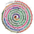 Spiral timetree.jpg