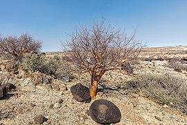 Spitzkoppe, Namibia, 2018-08-04, DD 37.jpg