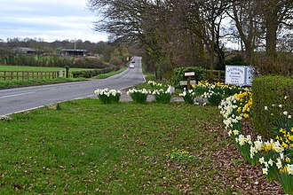 Allington, Hampshire - Image: Spring flowers beside Allington Lane (geograph 5315782)