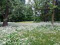 Spring time Łazienki Par.jpg