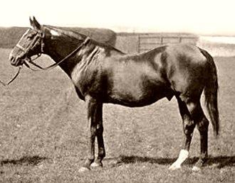 Springfield (horse) - Image: Springfield (GB)