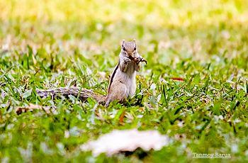 Squirrel looking beautiful.jpg