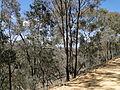 St Arnaud Range National Park.jpg
