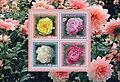 Stamps of Azerbaijan, 2010-901.jpg