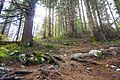 Stara Fužina - trail 3.jpg