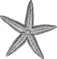 Starfish (PSF).png