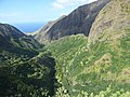 Starr-151005-0188-Aleurites moluccana-aerial view makai-West Maui-Maui (25677956174).jpg
