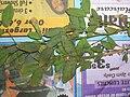 Starr 050427-1054 Pithecellobium dulce.jpg