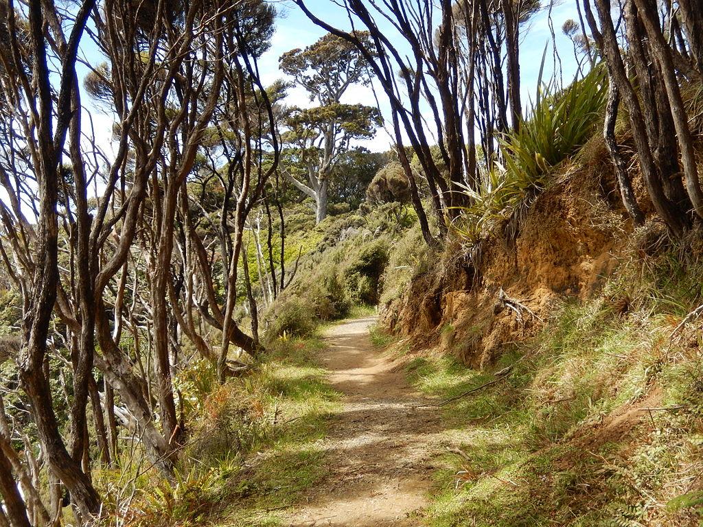 Stewart Island Rakiura Track 2104