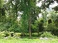 Stony Point Battlefield State Park - trees.jpg