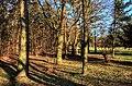 Stromy - panoramio (1).jpg