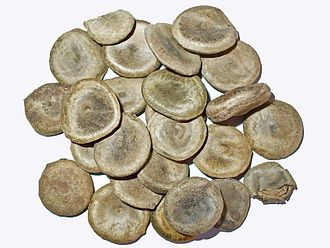 Strychnos nux-vomica - Seeds of S. nux-vomica