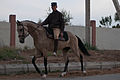 Studfarm in Turkmenistan - Flickr - Kerri-Jo (118).jpg
