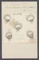 Stylonychia mytilus - - Print - Iconographia Zoologica - Special Collections University of Amsterdam - UBAINV0274 113 18 0007.tif