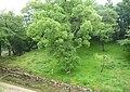 Sumoto Castle 14.jpg