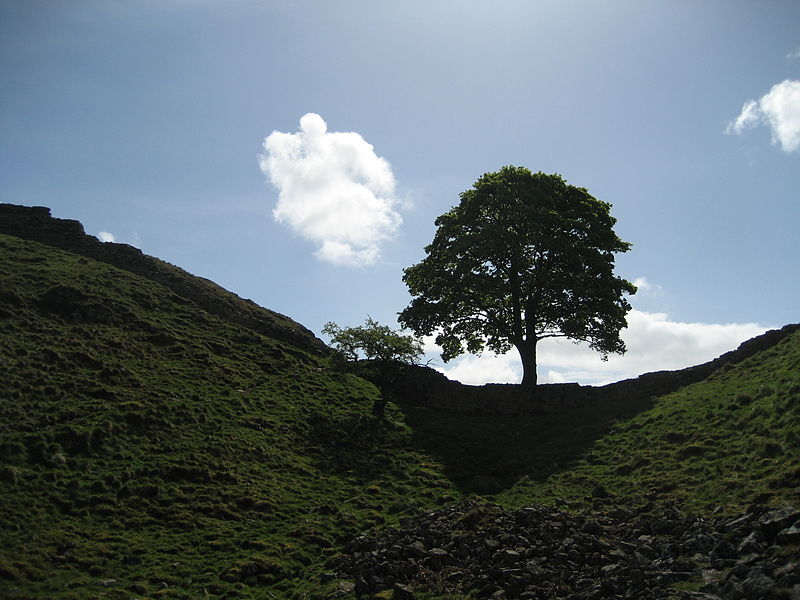 File:Sycamore Gap trees in May 2009.jpg