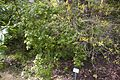 TU Delft Botanical Gardens 49.jpg