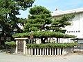 Takasago-jinja aioinomatsu.JPG