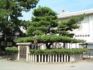 Takasago, Hyōgo - Aioi Pinus in Takasago Shrine