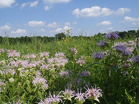 Tallgrass Prairie at Marais des Cygnes National Wildlife Refuge (6438347063).jpg