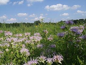 Tallgrass Prairie at Marais des Cygnes National Wildlife Refuge (6438347063).jpg
