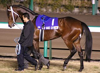 Tap Dance City American-bred Thoroughbred racehorse