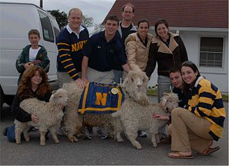 Bill the Goat - Bill XXXII, XXXIII, and XXXIV with Team Bill on May 2007.