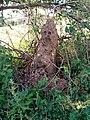 Termite hill in Baringo.jpg