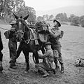 The British Army in the United Kingdom 1939-45 H21593.jpg
