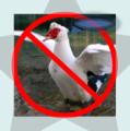 The Quackstar.png