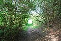 The Tunbridge Wells Circular Walk and High Weald Landscape Trail pass through a small woodland heading towards Pembury - geograph.org.uk - 1301587.jpg