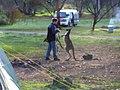 The boxing kangaroo (505664384).jpg