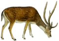 The deer of all lands (1898) Chital white background.png