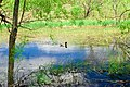 The duck Part 2 (2508435690).jpg