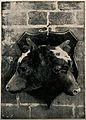 The heads of a two-headed calf, stuffed and mounted. Halfton Wellcome V0007394.jpg