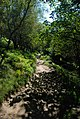 The low level path to Birchen Edge - geograph.org.uk - 551955.jpg