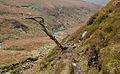 The path by Bleadale Water - geograph.org.uk - 652680.jpg