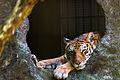 Tigre (8495745919).jpg