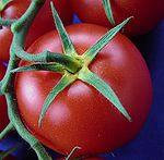 Tomate gelber Blütenkelch2