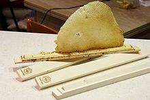 Top bar hive comb.jpg