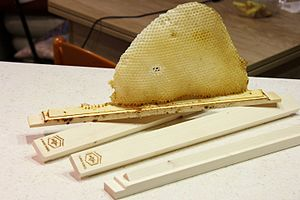 Horizontal top-bar hive - Image: Top bar hive comb