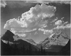 "Tops of pine trees, snow covered, ""In Glacier National Park,"" Montana., 1933 - 1942 - NARA - 519867.tif"