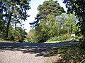 Towards Throop Heath - geograph.org.uk - 406234.jpg