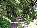 Track near Clappers Wood - geograph.org.uk - 1348431.jpg
