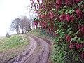 Track near Princeland - geograph.org.uk - 409423.jpg