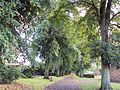 Tree-lined footpath, Higher Bebington Road - DSC09278.JPG