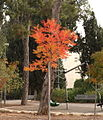 Tree in San Simon Park- Jerusalem (8207194087).jpg