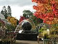 Tree in autumn at Hayes Garden World.jpg