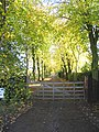 Tree lined drive, Magdalen Laver, Essex - geograph.org.uk - 79908.jpg
