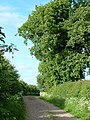 Tree on Jurassic Way - geograph.org.uk - 441514.jpg